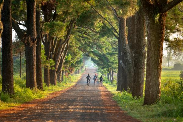3人の子供が自転車に乗る